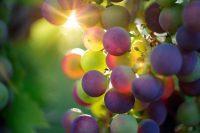 vino bergamasco eccellenze doc a bergamo e in provincia