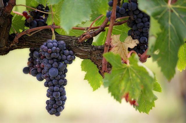 bergamo - le strade dei vini e dei sapori valcalepio