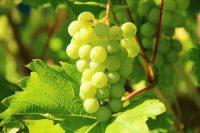 Vini bergamaschi - Valcalepio