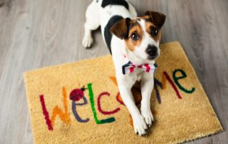 welcome pet pacchetto experience