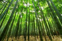 Bamboo massage trattamenti benessere