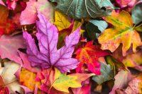 La biocromia - il colore che fa bene all'anima